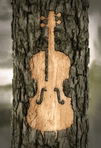 Jorin Jorden Probespielcoaching Cello Baumrinde